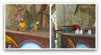 Parrot Show at Oasys Theme Park