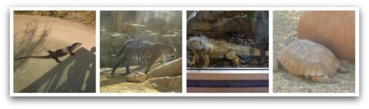 Zoo at Mini Hollywood Almeria, Spain