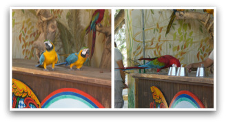 Parrot Show at Oasys Theme Park