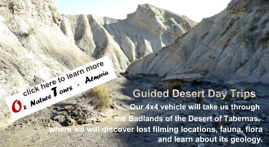 Tabernas Desert Day Trip