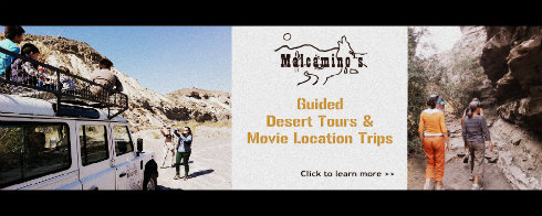 Guided Desert Tours